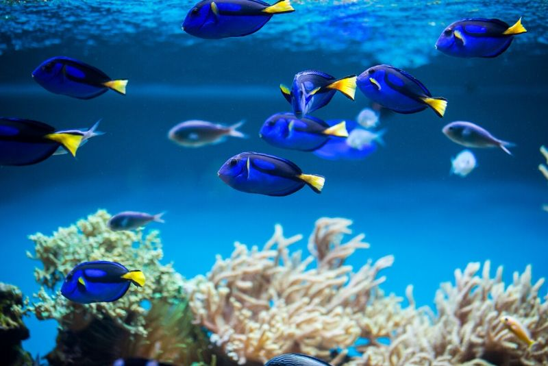 National Marine Aquarium, United Kingdom - #49 best aquariums in the world