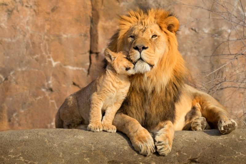 National Zoological Gardens of South Africa, South Africa