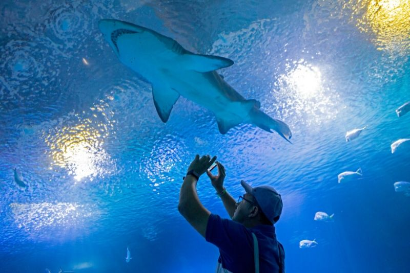 Oceanográfic, Spain - #6 best aquariums in the world