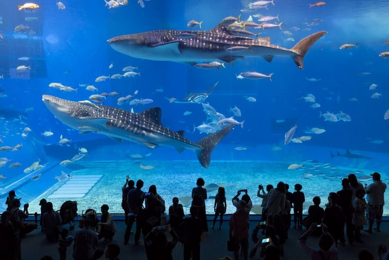 Okinawa Churaumi Aquarium, Japan - #1 best aquariums in the world