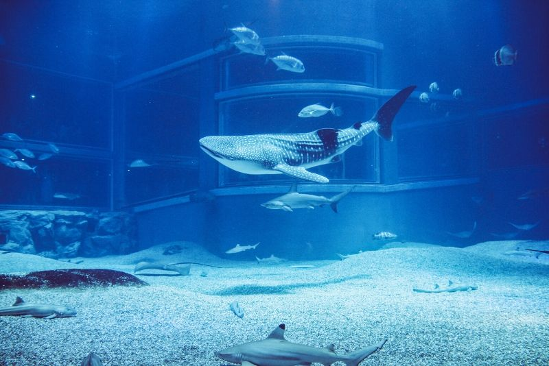 Osaka Aquarium Kaiyukan, Japan - #8 best aquariums in the world