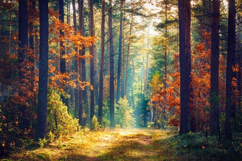 la forêt de Saint-Germain-en-Laye