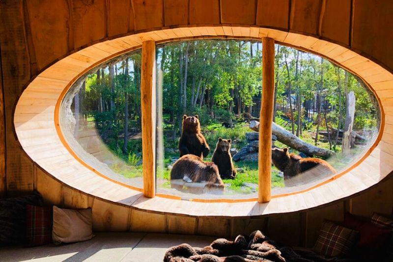 Choses à faire en Belgique #16 Passez une nuit dans le zoo de Pairi Daiza