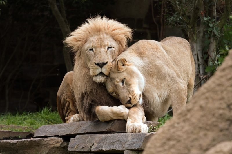Philadelphia Zoo, USA