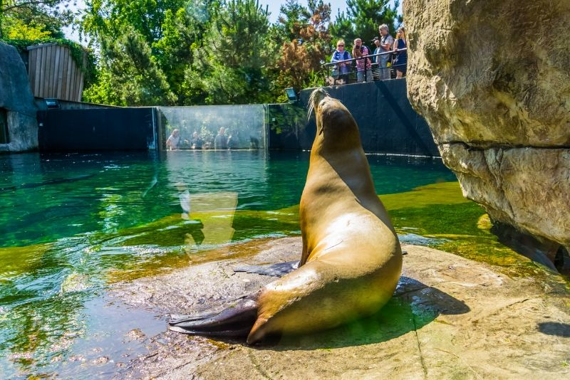 Rotterdam Zoo, Netherlands