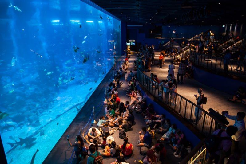 S.E.A. Aquarium , Singapore - #2 best aquariums in the world