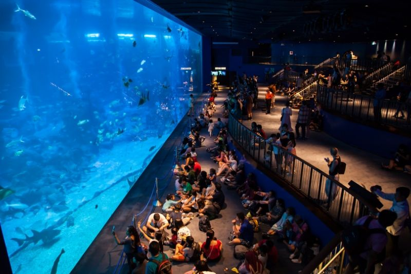 S.E.A. Aquarium , Singapore - #2 best aquariums in the world