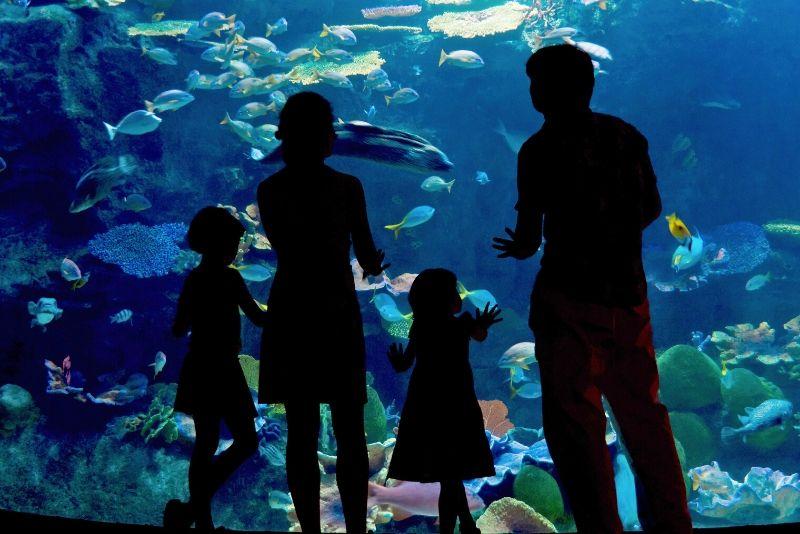 SEA LIFE Centre Istanbul Aquarium, Turkey - #31 best aquariums in the world