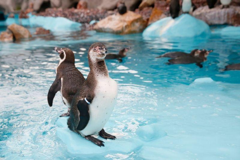 SEA LIFE Centre London Aquarium, United Kingdom - #38 best aquariums in the world