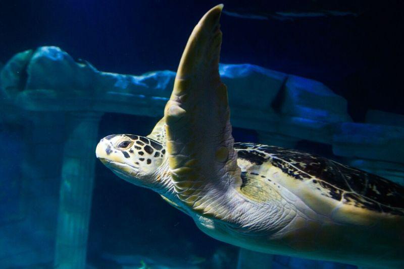 SEA LIFE Centre Porto, Portugal - #35 best aquariums in the world