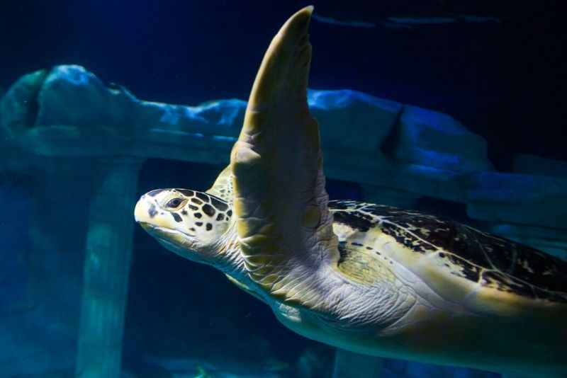 SEA LIFE Centre Porto, Portugal - #35 best aquariums in the world