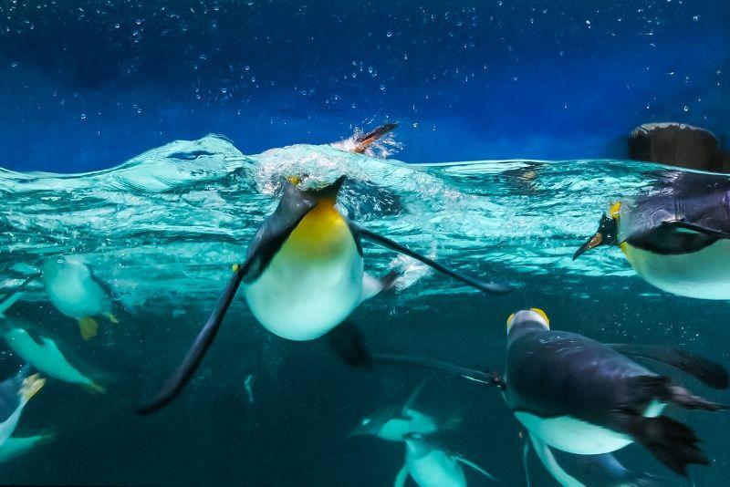 SEA LIFE Melbourne Aquarium, Australia - #45 best aquariums in the world