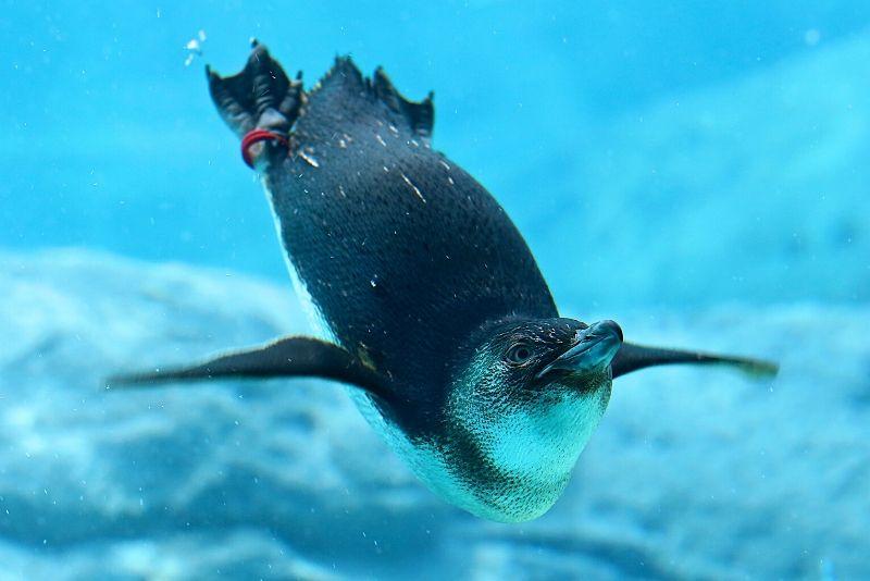 SEA LIFE Sydney Aquarium, Australia - #40 best aquariums in the world