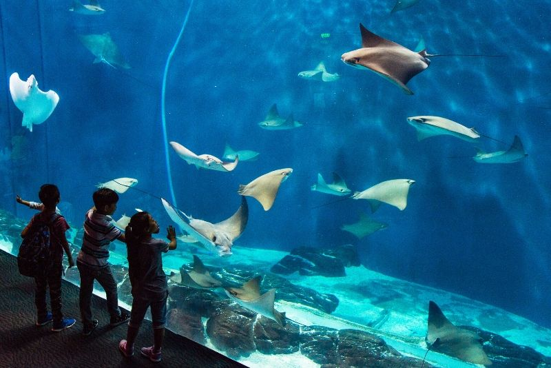 Shanghai Ocean Aquarium, China - #21 best aquariums in the world