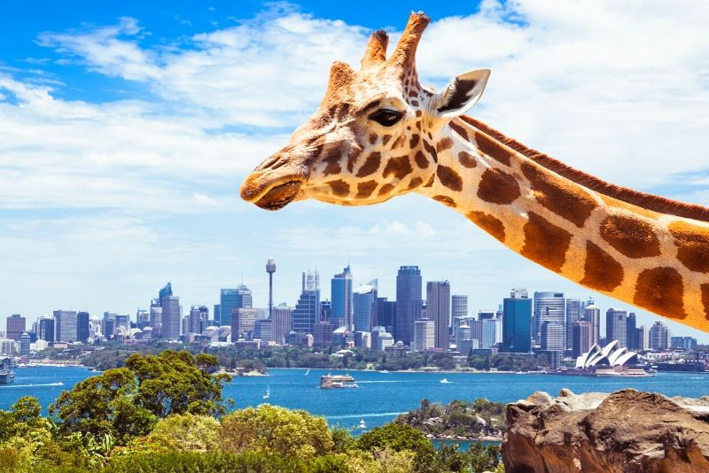 Taronga Zoo Sydney, Australia