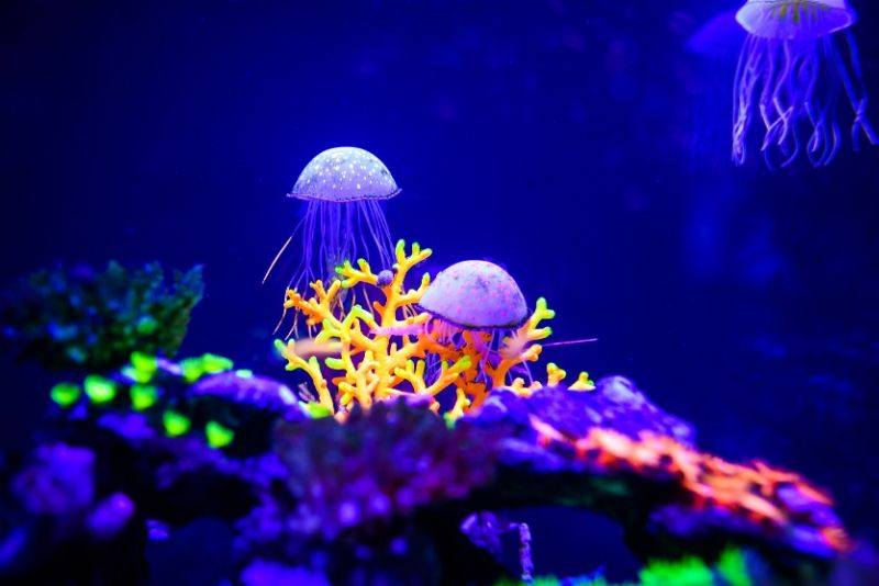 Tennessee Aquarium, United States - #37 best aquariums in the world