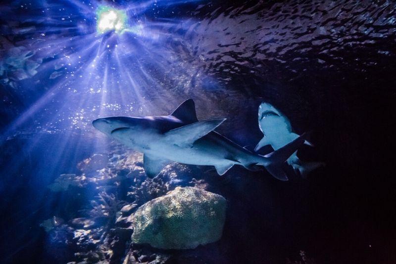 Texas State Aquarium, United States - #34 best aquariums in the world