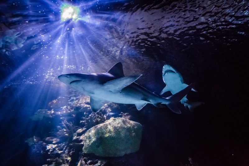 Texas State Aquarium, United States - #34 best aquariums in the world