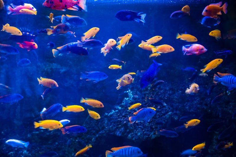 The Deep Aquarium, United Kingdom - #26 best aquariums in the world