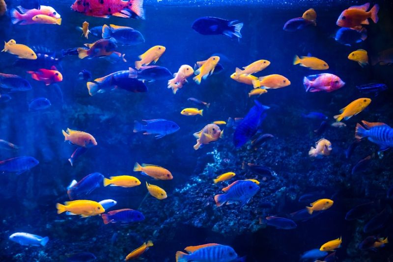 The Deep Aquarium, United Kingdom - #26 best aquariums in the world