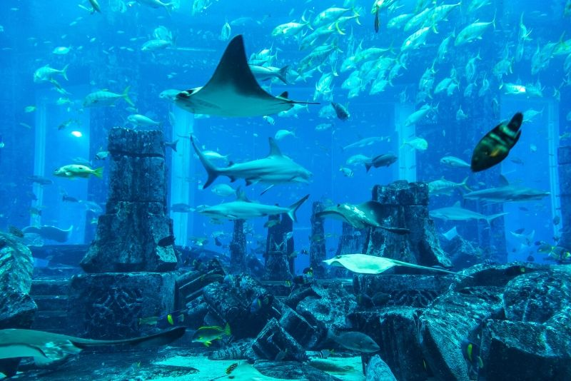 The Lost Chambers Aquarium, United Arab Emirates - #17 best aquariums in the world