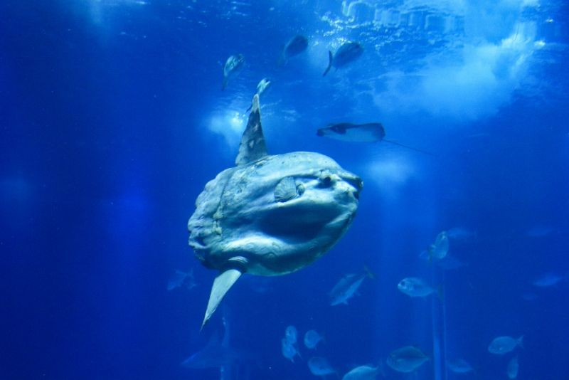 The North Sea Oceanarium, Denmark - #36 best aquariums in the world