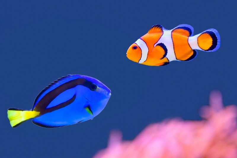 The Seas with Nemo & Friends, United States - #43 best aquariums in the world