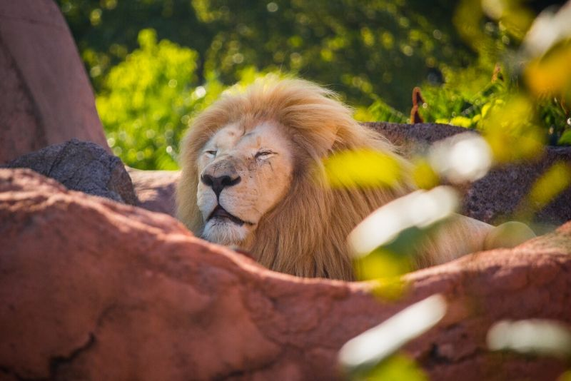 50 Best Zoos In The World 2021 Tourscanner