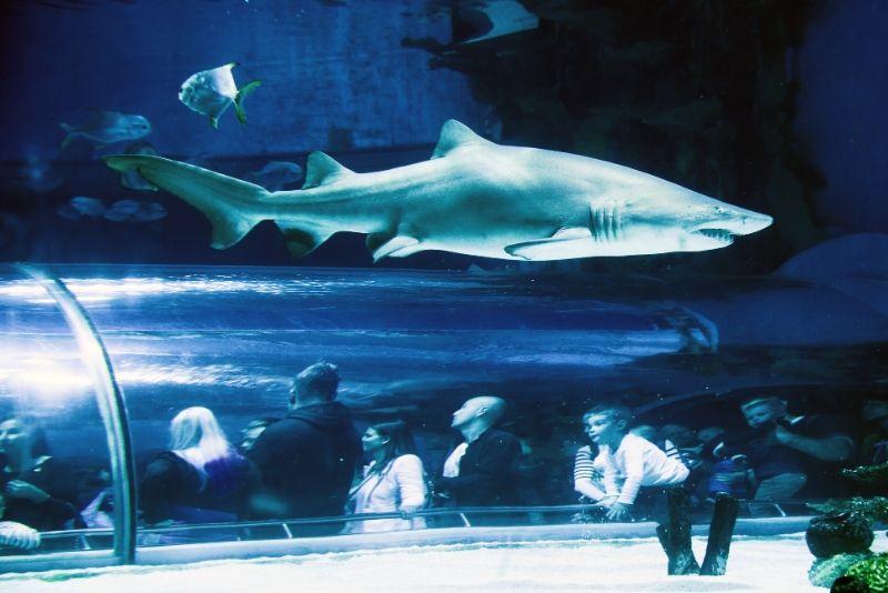 Tropicarium-Oceanarium, Hungary - #39 best aquariums in the world
