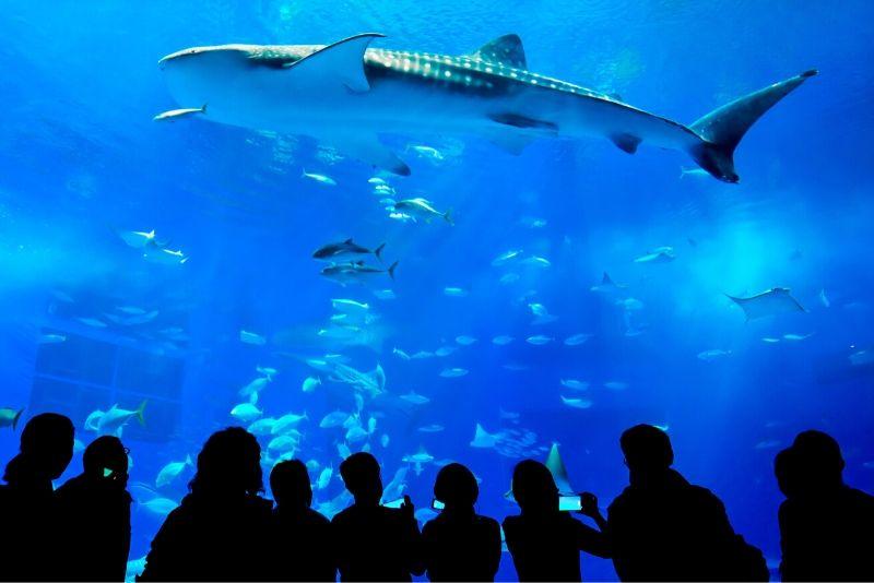 Yantai Haichang Whale Shark Aquarium, China - #32 best aquariums in the world
