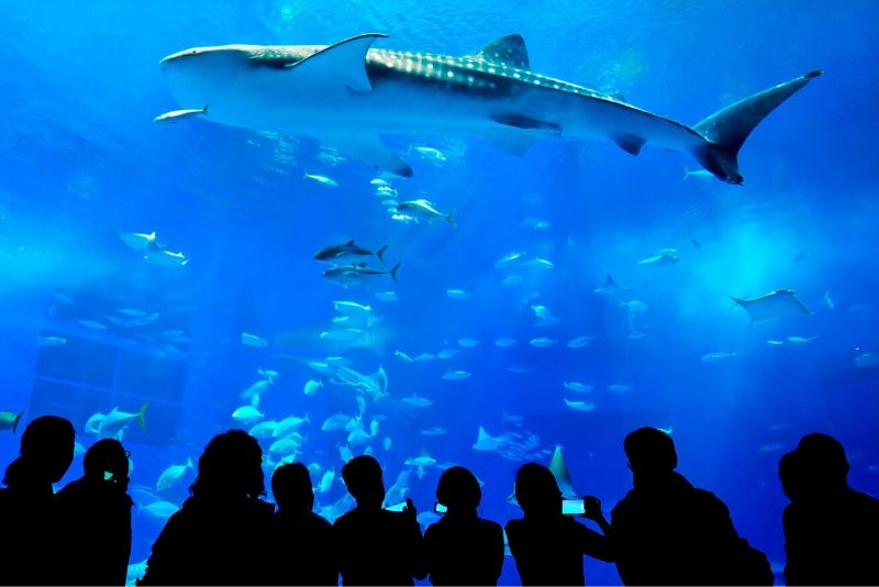 Yantai Haichang Whale Shark Aquarium, China - #32 best aquariums in the world