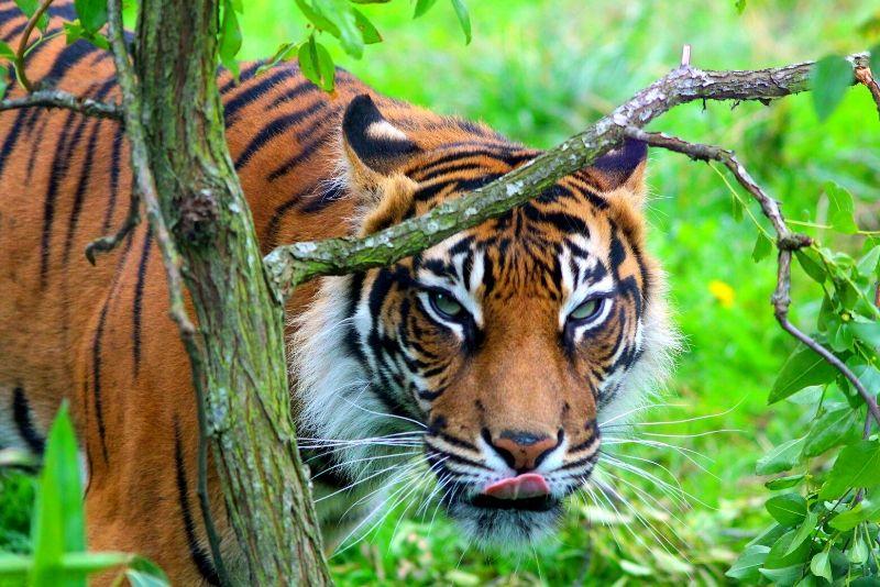 ZSL London zoo, UK