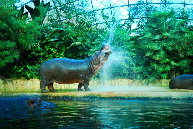 Zoo Berlin, Germany