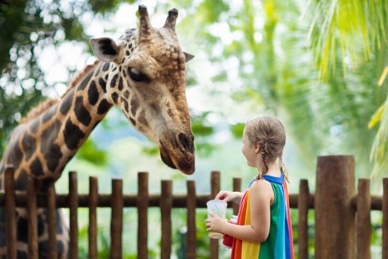 Sorties autour de Paris au Zoo de Paris - anciennement zoo de Vincennes