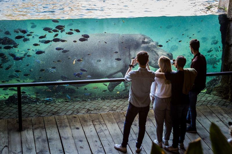 ZooParc de Beauval, France
