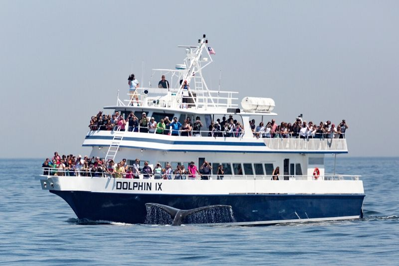 Boston whale watching cruise price cost