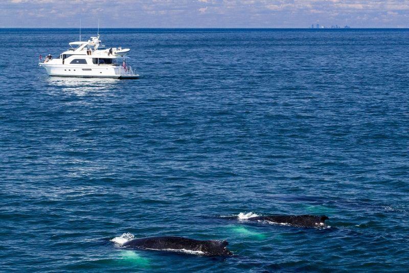 Boston whale watching cruises tips