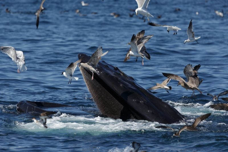 best time of year for whale watching in Boston