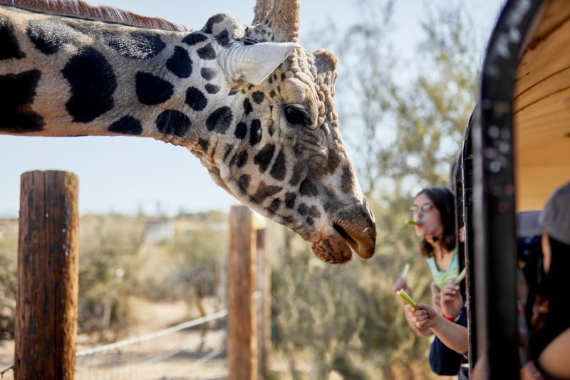 Jeep Tour of Camp Verde's Out of Africa Wildlife Park