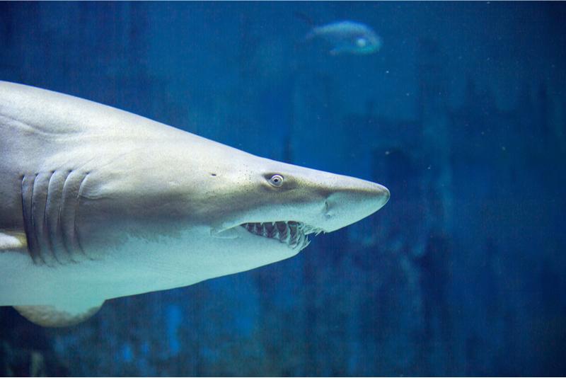 Acuario Shark Reef de Las Vegas