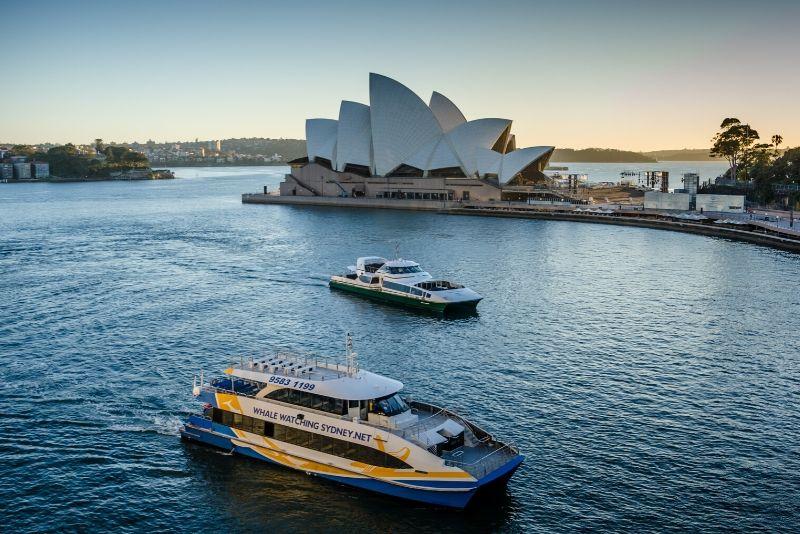 Sydney cruises