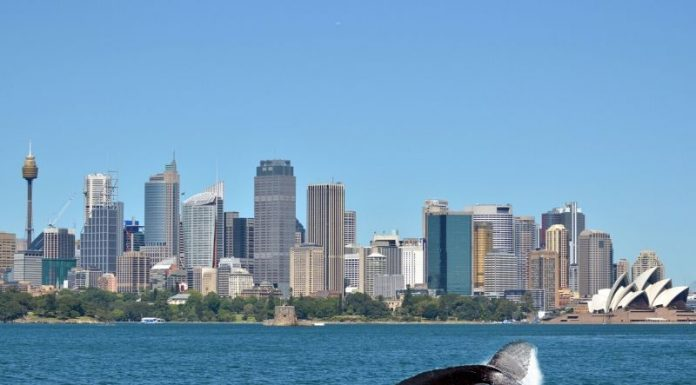 Sydney whale watching cruise