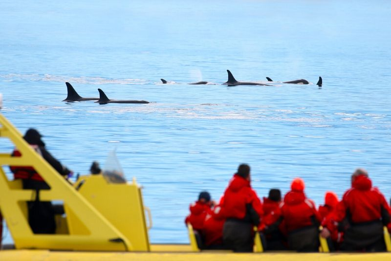 Vancouver whale watching cruise price
