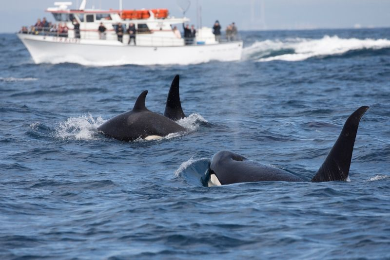 Vancouver whale watching tips