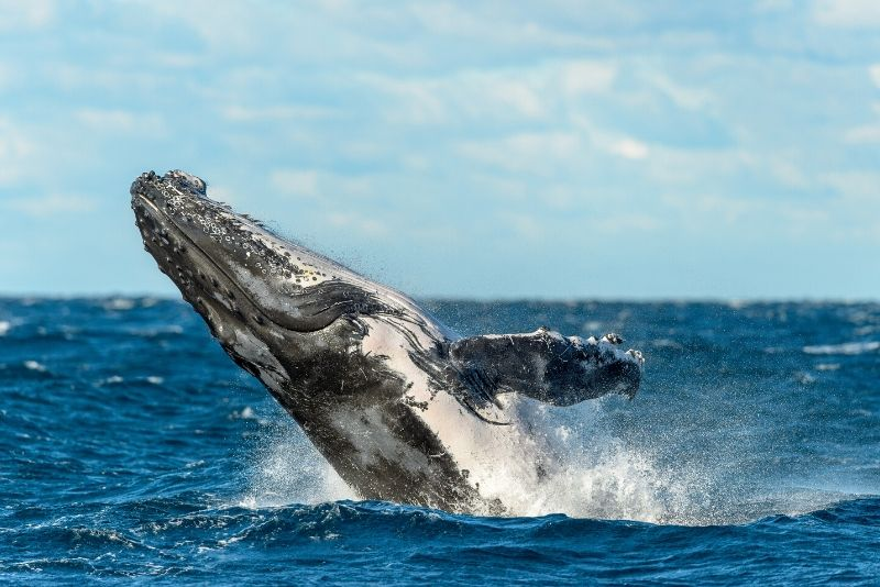 best time of year for whale watching in Sydney