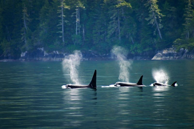 best time of year for whale watching in Vancouver