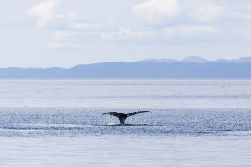 book Vancouver whale watching cruises online