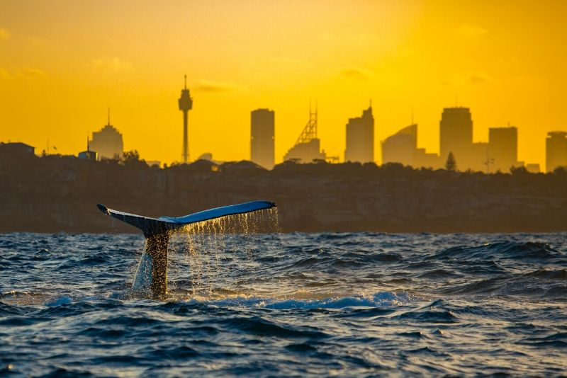 book a whale-watching cruise from Sydney online