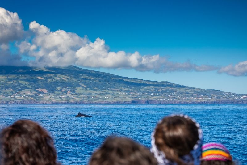 whale watching tour guides