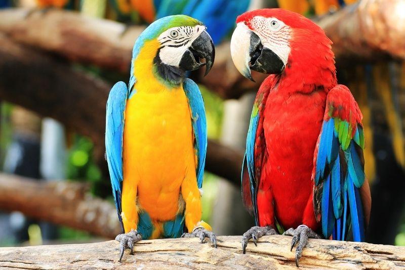 Parque ecológico Jungle Island, Miami, Florida